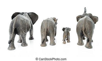 Elephant family. Backside of the elephant isolated on white background.