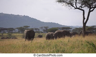 Elephant Family in Green Meadow of African Savanna. Animals in Conservation Area
