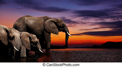 Elephant fantasy - Elephants at watering in african savanna