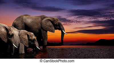 Elephant fantasy - Elephants at watering in african savanna