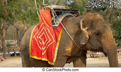 elephant for riding tourists standing in the shade under the...