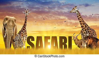 Elephant, giraffes, zebra and lion on the savannah at sunset.