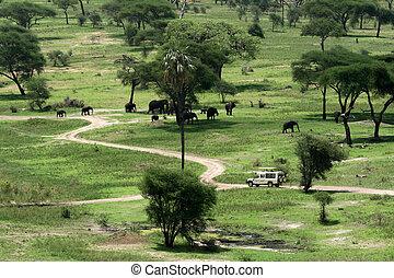 Elephant Habitat - Tarangire National Park. Tanzania, Africa...
