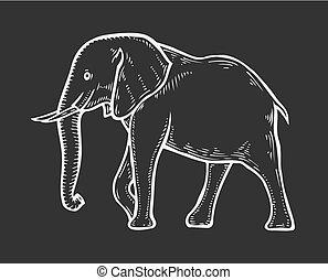 Elephant hand drawn