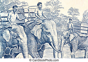 Elephant Handlers on Currency Note