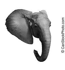 Elephant Head Isolated