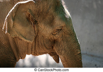 Sad elephant's head