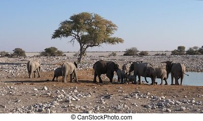 Elephant Herd at Okaukuejo Waterhole in Etosha, Namibia, with Tree