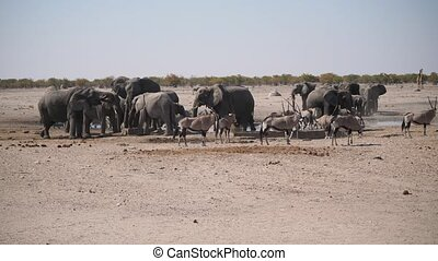 Elephant Herd at Waterhole, Etosha NP