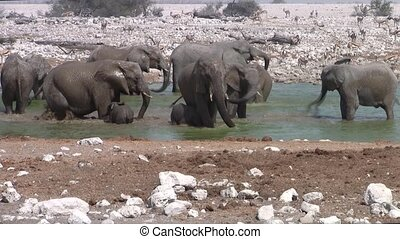 Elephant Herd Bathing at Okaukuejo Waterhole, Etosha NP, Namibia