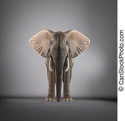 Elephant in a studio
