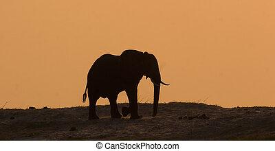 Elephant in Chobe