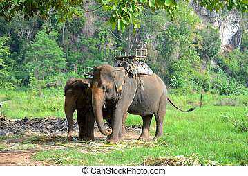 Elephant in forest at Chiang mai, thailand