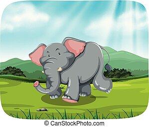 elephant in nature scene