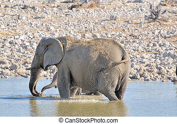 Elephant in Okaukeujo waterhole