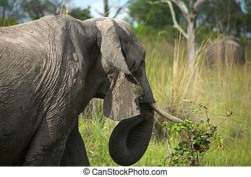 Elephant in the bush