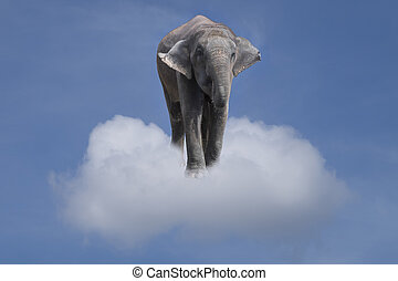 elephant in the clouds.