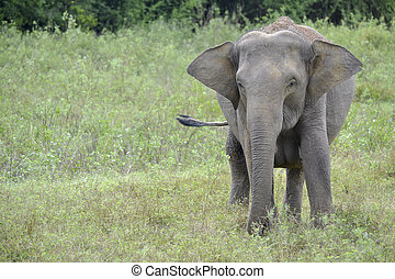 elephant in the jungle