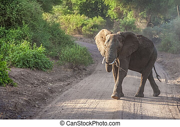 Elephant in the National park