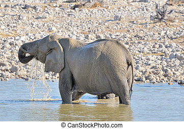 Elephant in the water, Etosha National park, Namibia