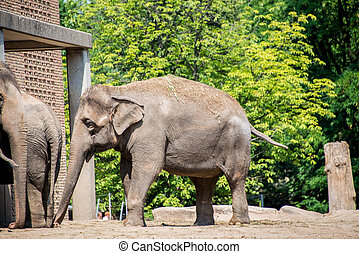 Elephant in the zoo during summer day