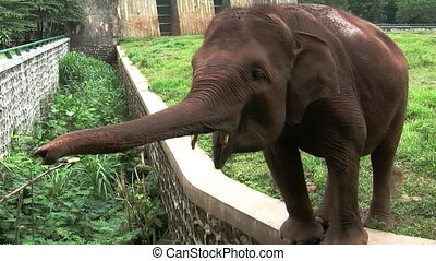 Elephant is in Jakarta zoological park, Indonesia.