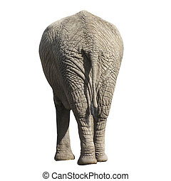 Elephant isolated on white background. Side back.