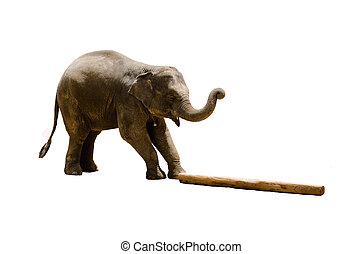 Elephant isolated on white
