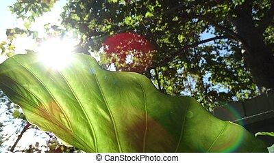 Elephant leaf 1