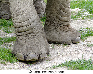 Elephant legs in detail on natural background