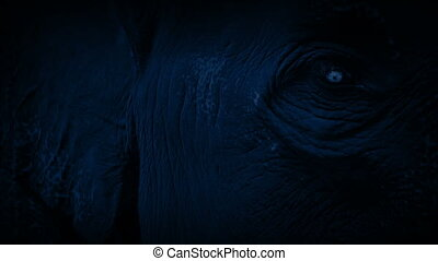 Elephant Looking Around At Night