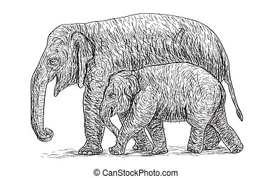elephant mother and baby walking beside, asia species sketch...
