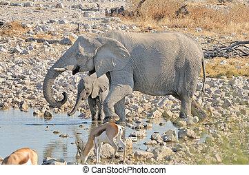 Elephant mother and calf at Okaukeujo