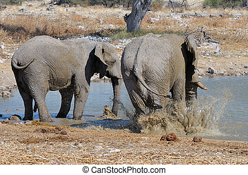 Elephant mud bath, Etosha National park, Namibia