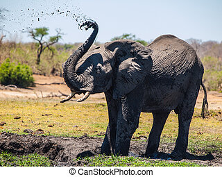 Elephant mud splash