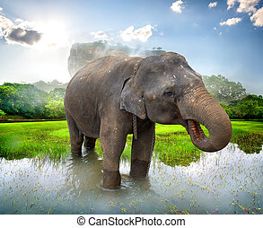 Elephant near Sigiriya