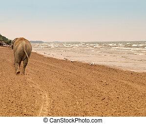 elephant on a beach