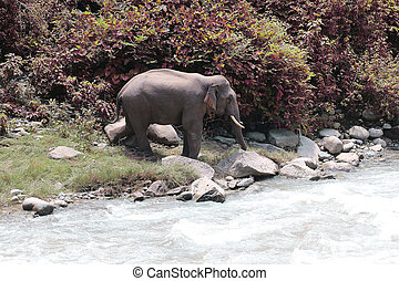 Elephant on lake view with garden