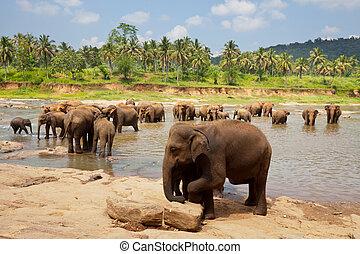 Elephant on Sri Lanka - Elephant  on Sri Lanka