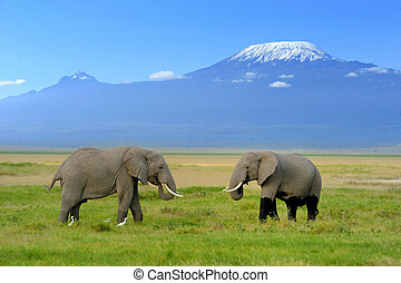 Elephant on the background of Mount Kilimanjaro in the ...