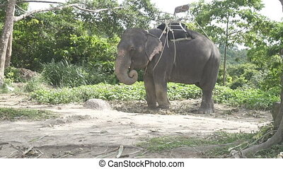 Elephant on the hill in Phuket - Beautiful elephant on the...