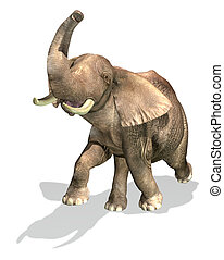 Elephant On white background.