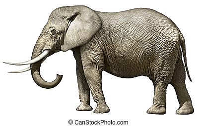 Elephant - Photo illustration of an elephant — side view.