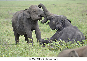 elephant playing on meadow