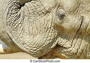 Elephant portrait