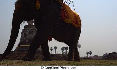 Elephant riding in Ayutthaya. The tourist rode on elephant...