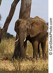 Elephant Scratching POst