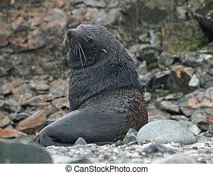 Elephant seal sitting on beach