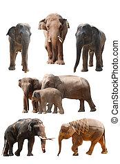elephant set isolated