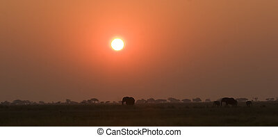 Elephant silhouettes in Chobe Game Reserve Botswana